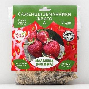 Саженец Земляники ФРИГО Мальвина A (9-15 мм) , 5 шт