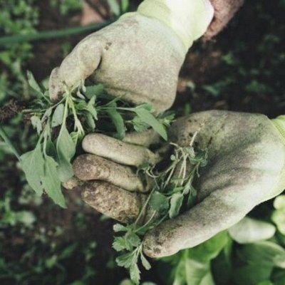 🆘 Травим тараканов, комаров, блох, садовых вредителей и др — Средства от сорняков — Защита от сорняков