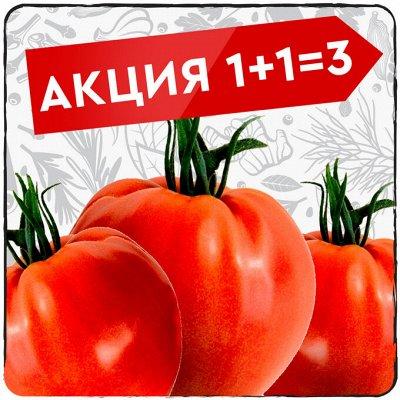 Экспресс! Мудрый дачник! Лук - Севок в наличии!✔ — Акция 1+1=3! — Семена овощей