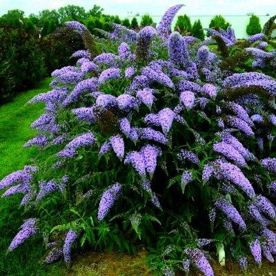 Растения! Выгодные цены! Ограниченное количество! Выбор!