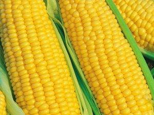 Кукуруза сахарная Краснодарская сахарная 4 (5г)