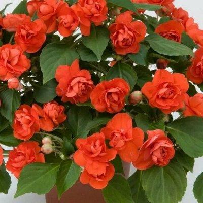 Цветочный дворик 💐 — Прочее — Декоративноцветущие