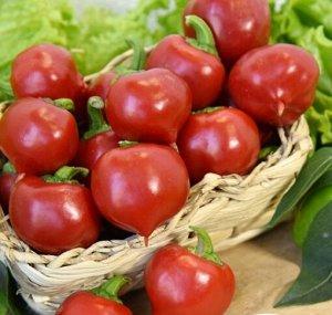 Перец сладкий Трюфелек Красный F1 (Вкуснятина) (8шт)