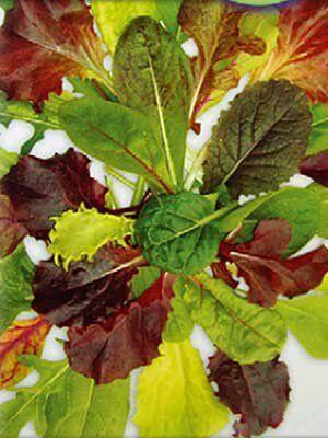 Салат листовой Бейби Ливз ЦВЕТНОЙ смесь (Вкуснятина) (3г)