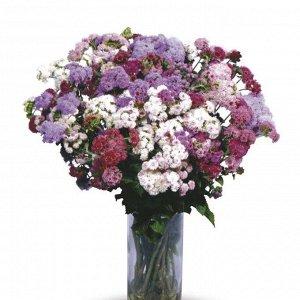 Цветы Агератум Таймлес F1 срезочный, смесь (150шт)