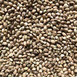 Семена конопли не очищенные