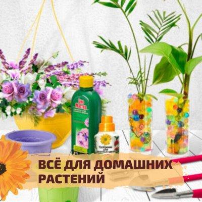 ✌ОптоFFкa ️Товары ежедневного спроса ️ — Всё для домашних растений — Кашпо и горшки
