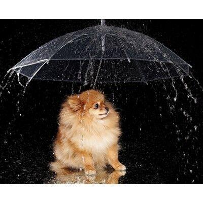 Товары для Любимцев. Уход, Содержание, Игрушки, Лакомства — Дождевики, зонты
