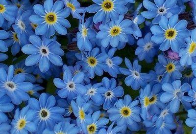 2000 видов семян для посадки! Подкормки, удобрения.     — Цветы многолетние — Семена многолетние