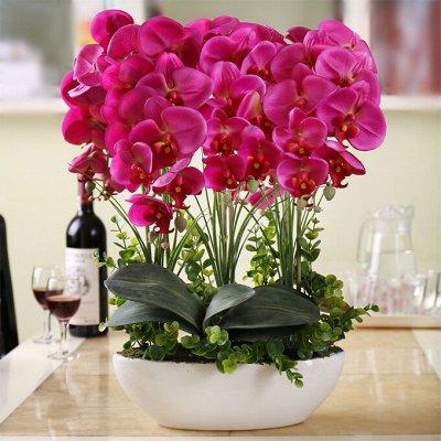 Хищный Sale! Огромный выбор комнатных растений!  — Любимые ФАЛЕНОПСИСЫ — Декоративноцветущие
