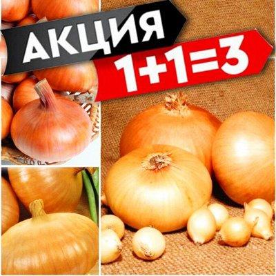 Ликвидация! 💥 Товары для дома - Молниеносная раздача!  — Лук Севок! — Семена овощей