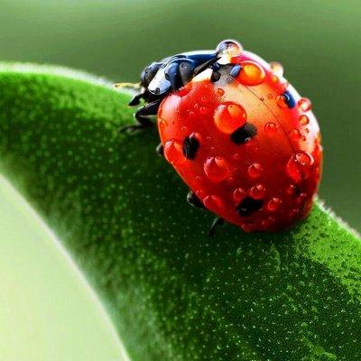 Японские удобрения для цветов, защита от насекомых и болезней — Средства защиты от насекомых