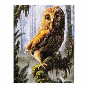 Роспись по холсту «Милая сова» по номерам с красками по 3 мл+ кисти+инстр+крепеж, 30 ? 40 см