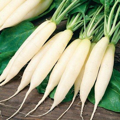 Распродажа семян, удобрений и садового инвентаря — Репа, редька