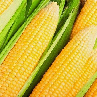 Распродажа семян, удобрений и садового инвентаря — Кукуруза