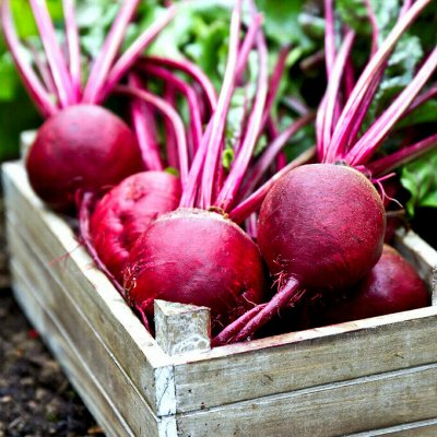 Распродажа посадочного материала! Огромный выбор! — Свекла — Семена овощей