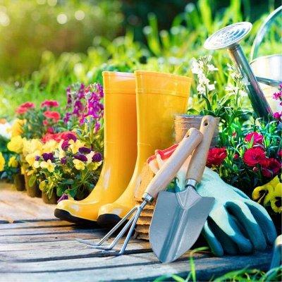 Распродажа посадочного материала! Огромный выбор! — Инструменты для работы в саду — Сад и огород