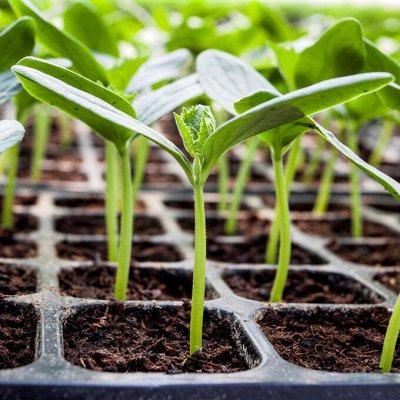 Распродажа семян, удобрений и садового инвентаря — Для рассады