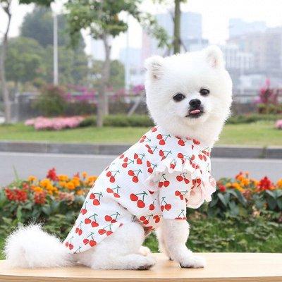 😺 Ушки, лапки, хвостики. Популярная закупка для любимцев — Легкая одежда для животных