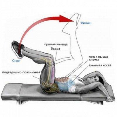 Экопокет. Психология в удобном формате — Книги про анатомию упражнений: скручивания, сгибания, бег