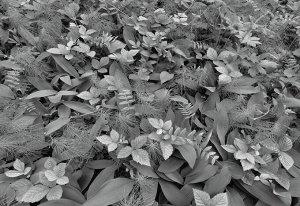 Фотообои Цветы в лесу