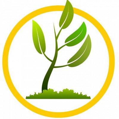 Нужная покупка👍 Зеленое удобрение- Сидераты — Распродажа Саженцев в наличии — Рассада и саженцы