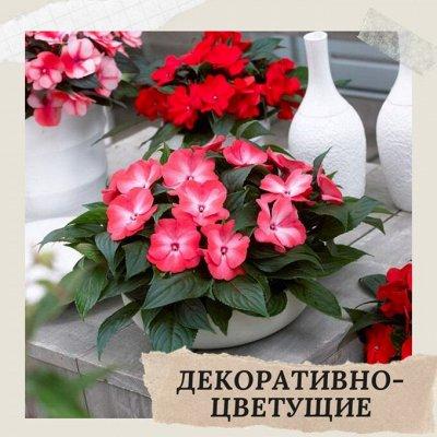 Хищный Sale! Огромный выбор комнатных растений — Декоративноцветущие растения