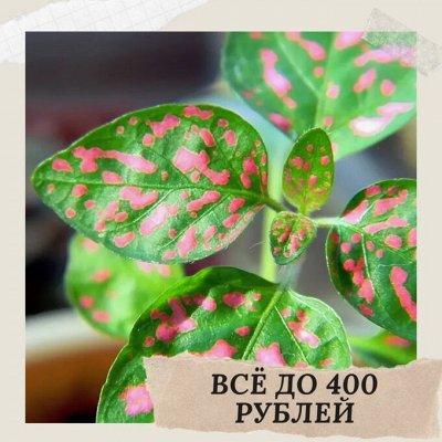Хищный Sale! Огромный выбор комнатных растений!   — Растения до 400 рублей! — Декоративноцветущие