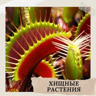 Хищный Sale! Огромный выбор комнатных растений!   — Хищные растения! — Комнатные растения и уход
