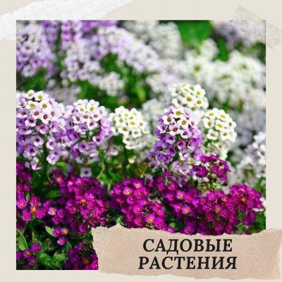 Хищный Sale! Огромный выбор комнатных растений — Садовые растения