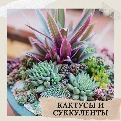 Хищный Sale! Огромный выбор комнатных растений!   — Кактусы и суккуленты — Кактусы и суккуленты