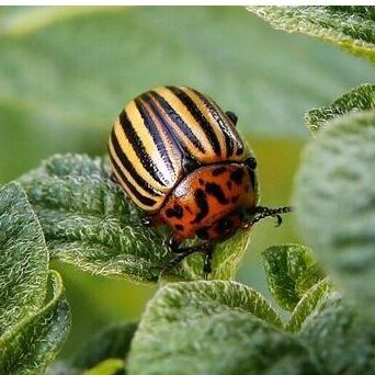 Дачная ярмарка - агрохимия: удобрения, средства д/защиты — Средства для борьбы с насекомыми вредителями — Удобрения и агрохимия