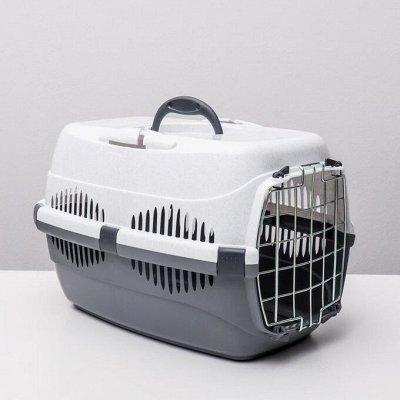 Товары для животных — Перевозки для собак