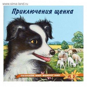 Приключения щенка