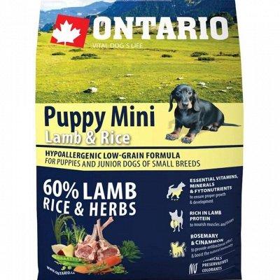 ✔Корма премиум класса д/кошек и собак + Витамины, био-добавки — Ontario. Корм для собак малых пород