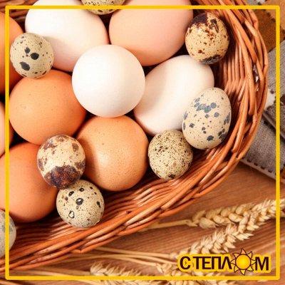 Наисвежайшая деревенская молочка ✔Фермерские продукты — 🥚 ЯЙЦА Фермерские (Куриные & перепелиные)