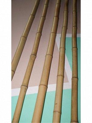 Бамбук ствол D - 3см- 4;5см  длина 280см