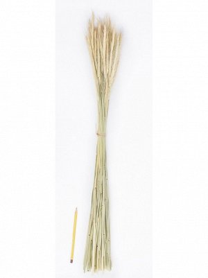 Букет из сухих колосовых культур - рожь 75 гр Арт 28143