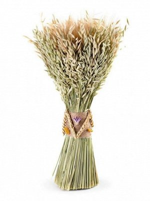 Букет из сухих колосовых культур овес; пшеница 16 х 19 х 48 см Арт hk40873