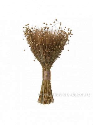Букет из сухих колосовых культур пшеница лен h 480 мм