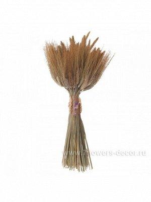 Букет из сухих колосовых культур пшеница чумиза h 480 мм Арт hk40873