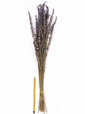 Лаванда натуральная 58 см  HS 19-1
