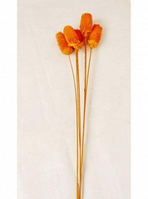 Сухоцвет ворсянка сухая 5шт