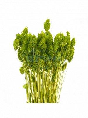 Фаларис цвет зеленый 100 гр