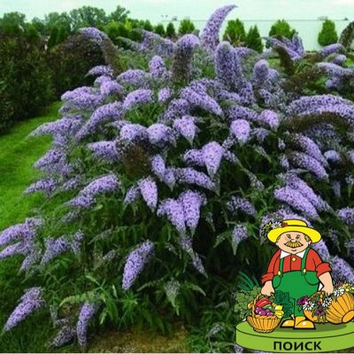 2000 видов семян для посадки! Подкормки, удобрения.