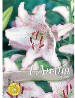Бразилиа Цена за упаковку В упаковке 1 луковиц Размер 14/16 Цвет: белоснежные с бело-розовой каймой