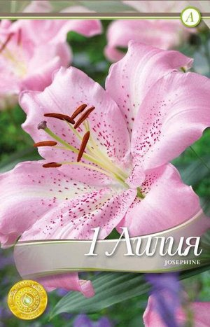 Жозефина Цена за упаковку В упаковке 40 луковиц Размер 14/16 Цвет: светло-розовый