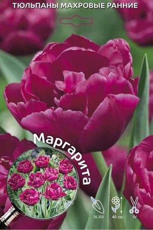 Маргарита Цена за упаковку В упаковке 5 луковиц Размер 11/12 Цвет: пионовидный, темно-розово-пурпурный
