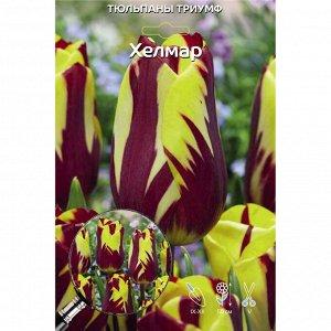 Хелмар Цена за упаковку В упаковке 5 луковиц Размер 11/12 Цвет: яркого лимонно-желтого оттенка с контрастным малиново-вишневым рисунком,