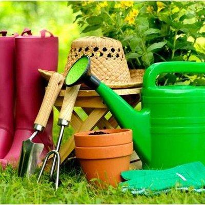 ✔Осенний предзаказ: Луковичные и Саженцы — Товары для сада и дома
